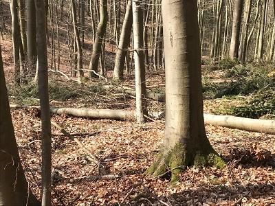 natur-spielen-mit-stick-lets-spielzeug-kinder-ab-6-jahre