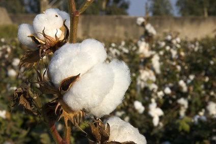 Biobaumwolle-ohne-Chemie-oder-Umweltverschmutzung
