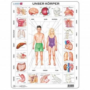 Lernpuzzle Anatomie für Kinder ab 6 Jahre